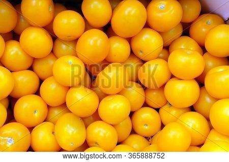 Yellow Tomatoes Pattern, Surface Of Yellow Tomatoes Group Texture