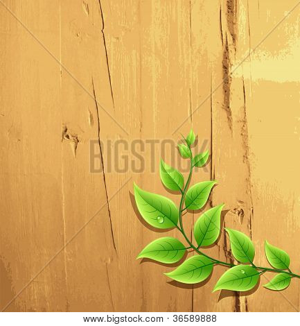 fresh green leaf on wood wallpaper background