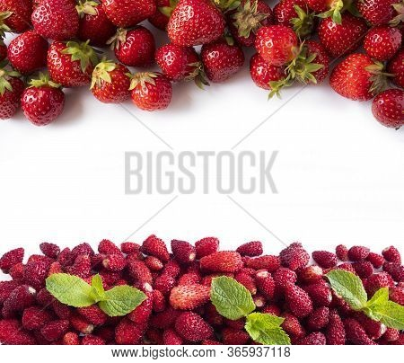 Background Of Wildberries And Strawberries. Ripe Wild Strawberry On A White. Wild Strawberries And S