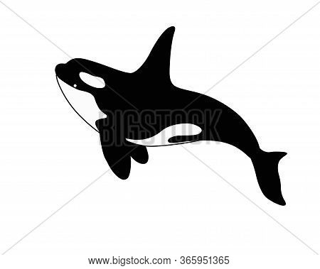 Killer Whale - Stock Vector Silhouette Of A Marine Mammal. Оrca Is A Marine Cetacean For A Logo Or P
