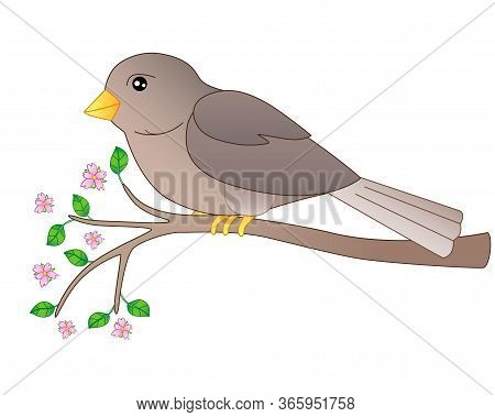 A Small Bird - A Sparrow Sits On A Flowering Branch - A Full-color Vector Spring Picture. Gray-brown