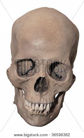 Smiling Human Skull