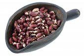 Scoop Of Anasazi Beans