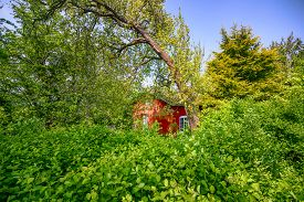 Red Summer Cabin In An Overgrown Garden With Green Trees And Plants