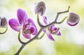 Purple Orchid Flowers On A Fresh Green Background At A Wellness Spa