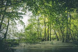 Idyllic Forest Swamp With Fresh Green Trees In The Springtime