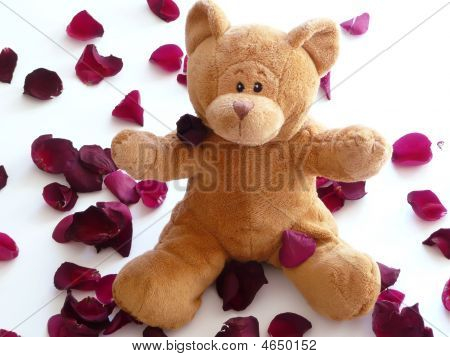 Teddy Bear With Rose Petals