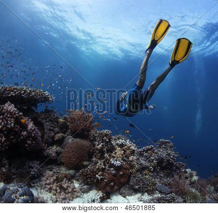 Freediver gliding underwater over vivid coral reef. Original colors