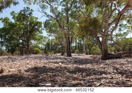 Dry River bed. Flinders Ranges (near Iga Warta). South Australia. poster