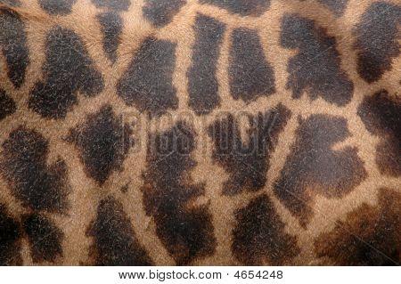 Giraffe Background Textue