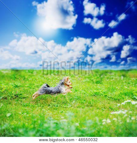 Cheerful little dog