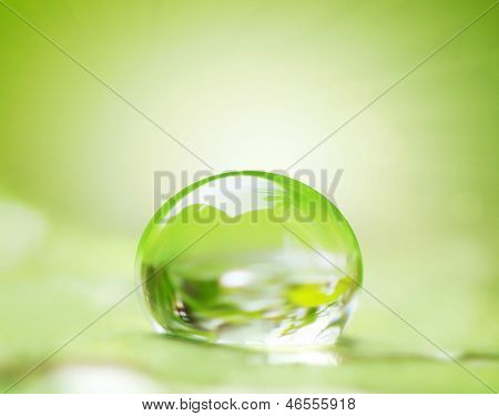 green leaf and water drop on it shallow dof