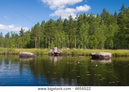 Summer Forest Lake