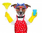 housewife dog with rubber gloves and a feather duster poster