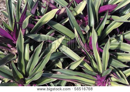 Beautiful Green And Purple Plant