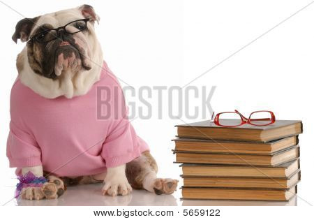 dog obedience school - english bulldog sitting beside a stack of books poster