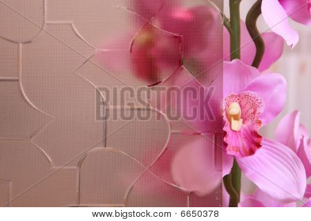 Orchid Behind The Stained Glass