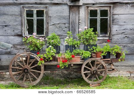 Old Wagon Full Of Flowers