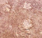 Dinosaur footprint in limestone 180 million years old Navajo National Monument Arizona poster