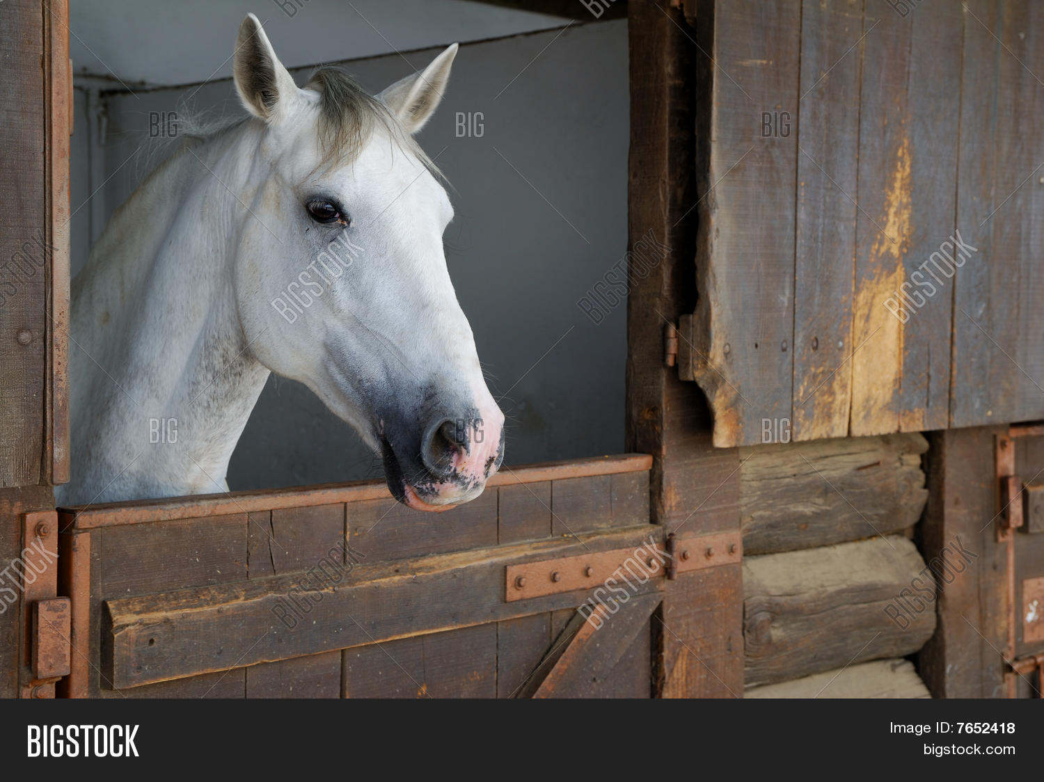 Horse Stable Image Photo Free Trial Bigstock