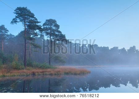 Coniferous Forest At Wild Lake