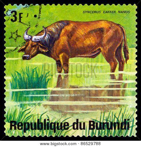 Vintage  Postage Stamp. Cape Buffalo. Animals Burundi.