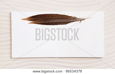 Pair of feathers on a white beige empty background or frame. Idea for a greeting card.