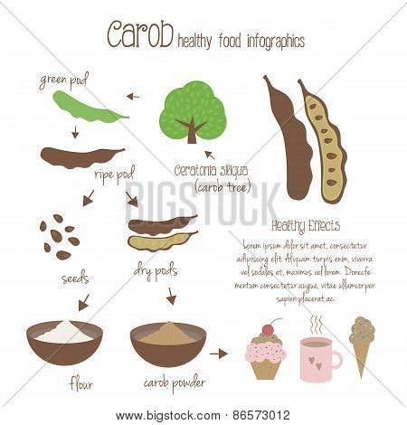 Carob Infographics. Vector Illustration