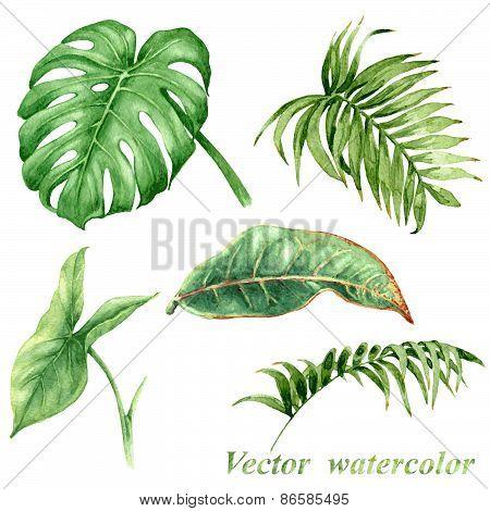 Tropical Plants  Leaves Set