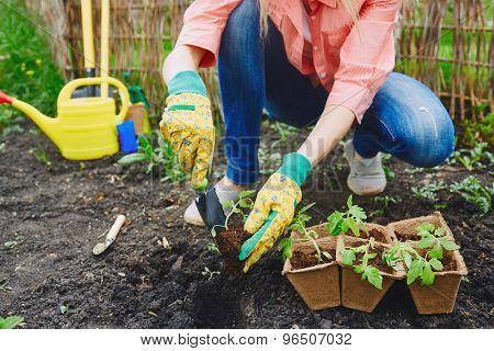 Female farmer in gloves replanting green seedlings