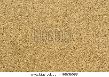 Thymol Seeds (ajwain)