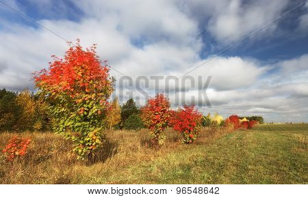 Multicolored autumn bushes along the field with clouds