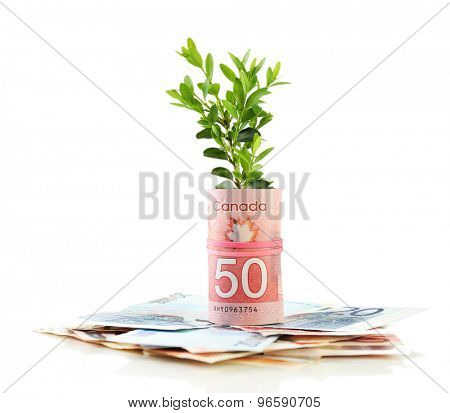 Money with growing sprout isolated on white