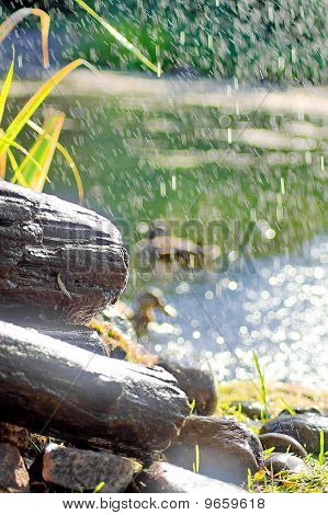 Pond Rocks And Bokeh'd Ducks