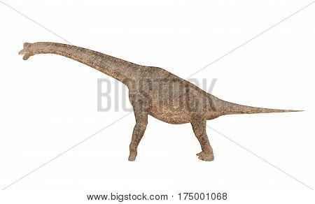 Brachiosaurus dinosaur isolated on white background, 3D rendering