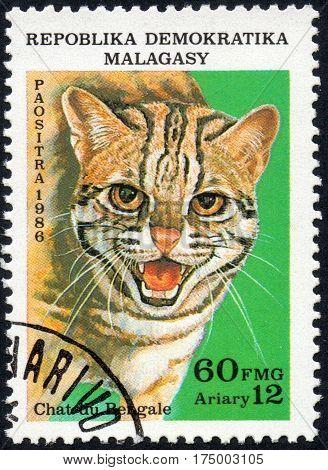 UKRAINE - CIRCA 2017: A stamp printed in Malagasy Madagascar shows Cat of Bengal circa 1986