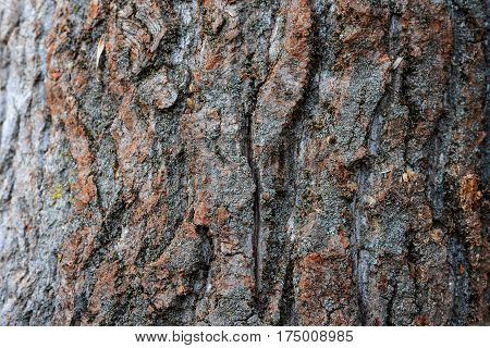 Beautiful Natural Texture Of Bark Wood Plank Use As Nature Wooden Textured