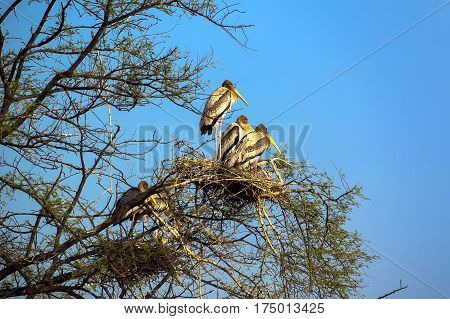 wild birds sitting in a tree in the nest. National Park birds Agra India wildlife.