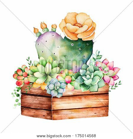 Watercolor handpainted succulent plant in wooden pot and cactus flowering.