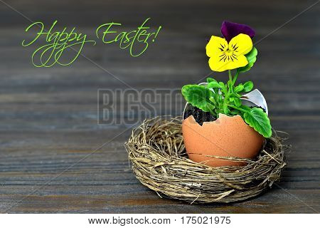 Happy Easter text and spring flower in eggshell