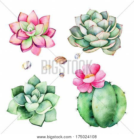 Watercolor collection with succulents plants, pebble stones,cactus.
