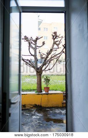 View of a leafless oak from inside a village house in La Coruna Galicia Spain