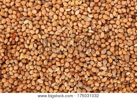 Millet healthy food seeds