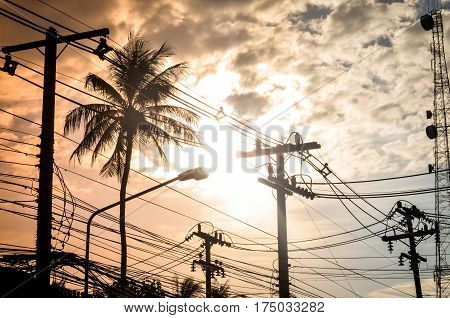 coconut palm trees and electric cable in evening sun