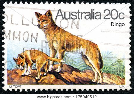 AUSTRALIA - CIRCA 1980: A used postage stamp from Australia depicting an illustration of a Dingo circa 1980.