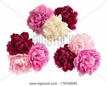 Set of three peonies bouquets isolated on white background