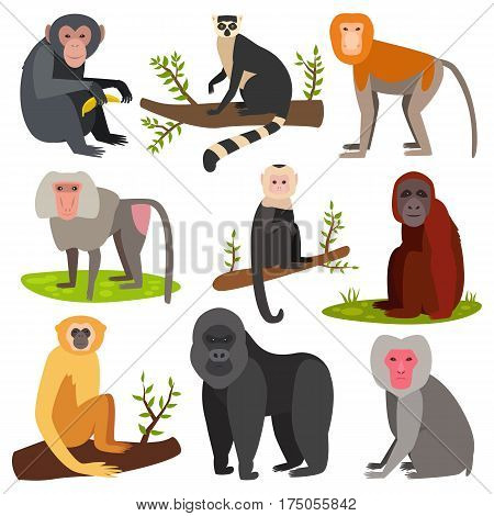 Different breads monkey character animal wild vector set illustration. Macaque nature primate character. Wild zoo ape chimpanzee. Wildlife jungle animal,
