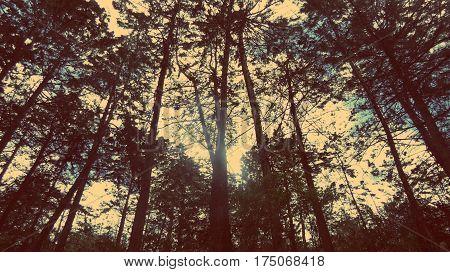 bosque, arboles, arboleda, sol, nubes, paisaje, troncos, contraluz