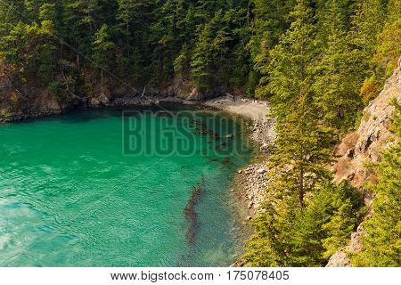 A small cove at Deception Pass State Park Washington with floating kelp massing near the shoreline