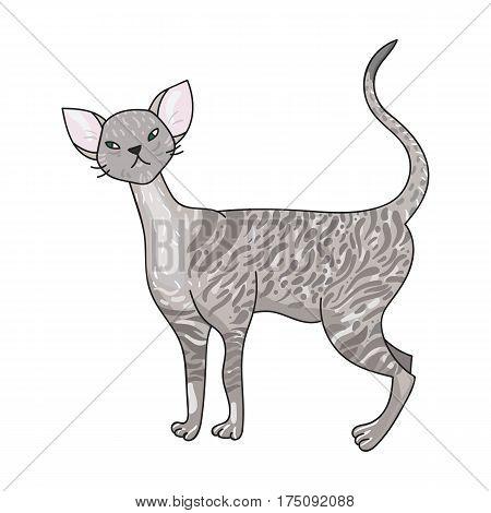 Cornish Rex icon in cartoon design isolated on white background. Cat breeds symbol stock vector illustration.